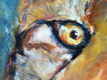 Close up of eye of Tommy's Cheetah
