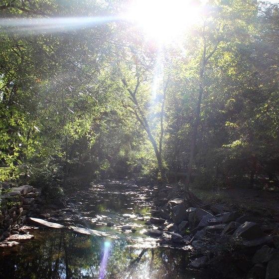 Nature Shot By NDGTheArtist