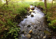 Stream in Summer time