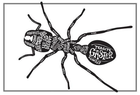 Ant Anatomy - LA Natural History Museum