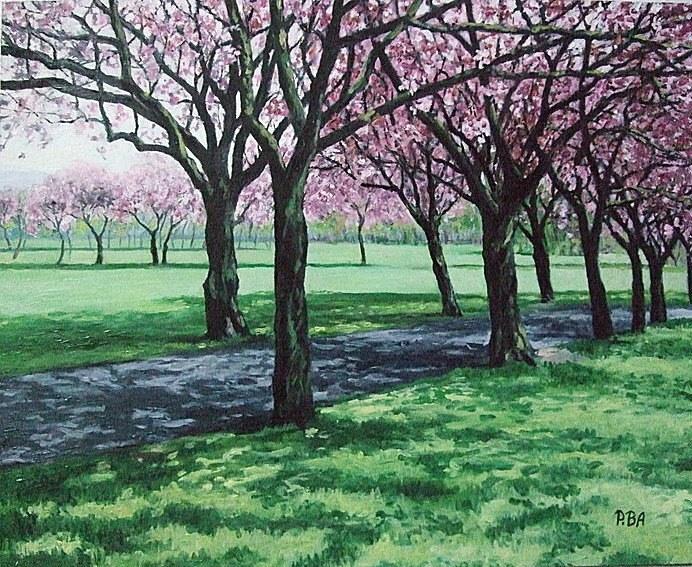 Cherry blossom. The Meadows, Edinburgh