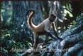 Spider Monkey Costa Rica, C.A