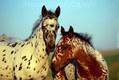Montana Horses. 3