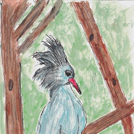 Endangered Bird Sketches