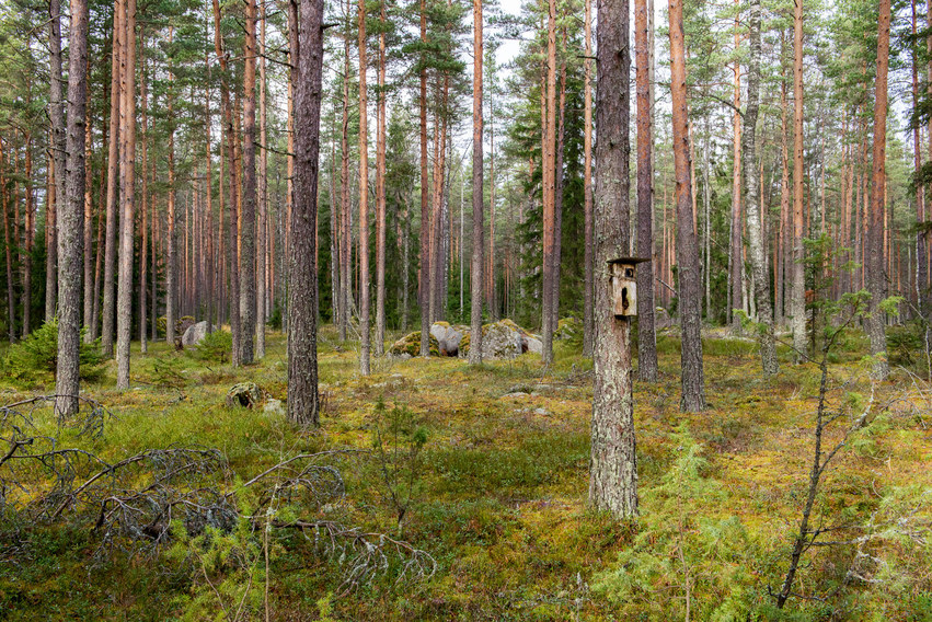 The magical spirit of Finnish forest